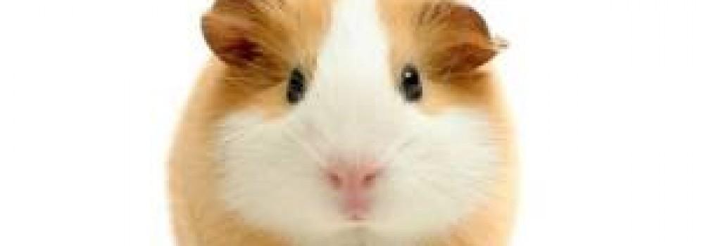 Novo processador da IBM equivale ao cérebro de um roedor